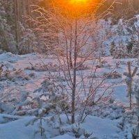 уходящий свет северного дня :: Елена