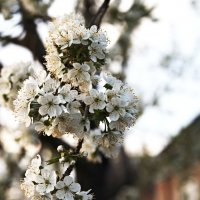 Пришла весна.... :: Александр Бессараб