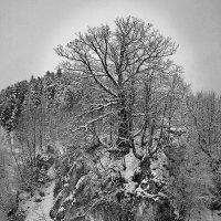 На краю обрыва. :: Андрий Майковский