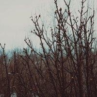 Весна совсем пришла :: Дмитрий Долгов