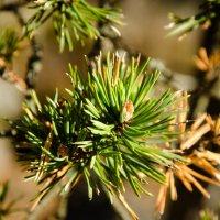 елки иголки :: golfstrim