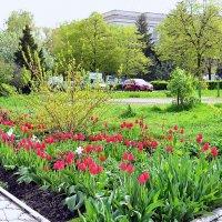 Весна-16 :: Владимир Болдырев