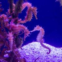 аквариум :: Адик Гольдфарб
