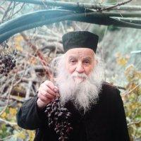 Ветка винограда :: Мила