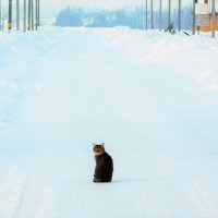 Ожидая на дороге :: Ольга Алеева