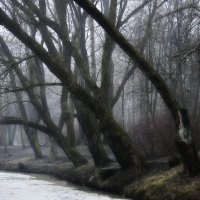 В парке весеннем.... :: Юрий Цыплятников