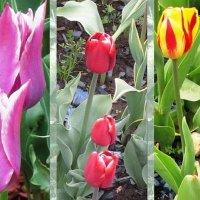 Цветы весны :: Дмитрий Никитин