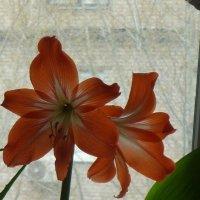 На моём окне :: Татьяна Юрасова