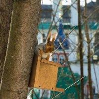 Да орешки всё грызёт :: Сергей Залаутдинов