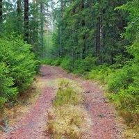 В лесу... :: Mari Kush