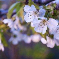 весна... :: Тамара