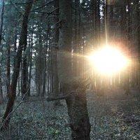 Вечерний лес-прекрасен! :: Валерия