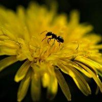 Житель планеты цветов. :: владимир