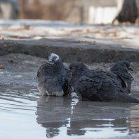 Зимняя баня :: serj ghilan