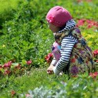 спряталась в цветочках :: Олег Лукьянов