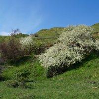 весна на Донской земле :: Olga Grebennikova