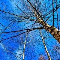 ... какое небо голубое !!! :: Анатолий. Chesnavik.