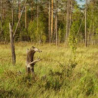 Нежить болотная :: Дмитрий Костоусов