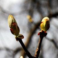 Весна :: Татьяна Богачева
