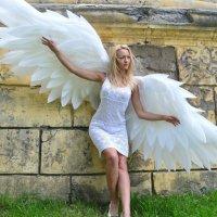 ангел :: Анна Кравченко