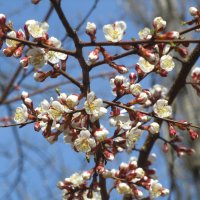 ну вот и весна! :: tgtyjdrf