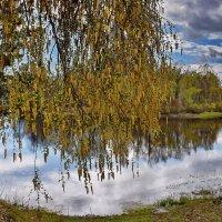 Весенние  цветы... :: Валера39 Василевский.