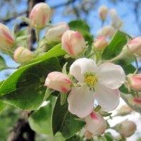 Весна :: Колибри М