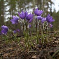 Весточка весны :: Алексей Головин
