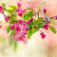 Весна :: Anatol' SH