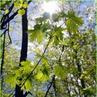 В лесной тиши :: Андрей Заломленков