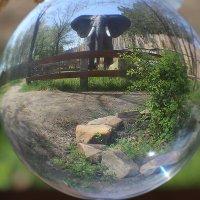 Динопарк в хрустальном шаре :: Alexander Varykhanov