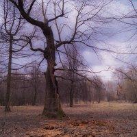 Прозрачный лес :: Наталья Лакомова