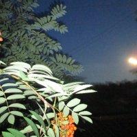 Лунная ночь. :: Valentina