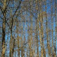 Весенний лес :: Yana Odintsova