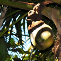 Коко де мер (Сейшельский орех, Морской кокос, Мальдивский орех) :: vg154