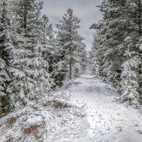 Дорога в сказочный лес :: Valeriy Piterskiy