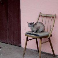 Бабушка кошка. :: Ольга Кривых
