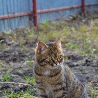 Котик :: Света Кондрашова