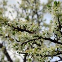Цветущие деревья представляют собой восхитительное зрелище! :: Валентина ツ ღ✿ღ