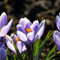 цветы :: Nadia Brusnikova