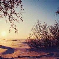 Зимний закат :: Даниил Шинкарёв