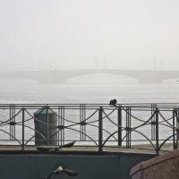 В тумане Дворцовый мост :: Елена
