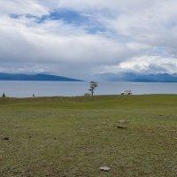 Просторы Монголии :: Андрей Д