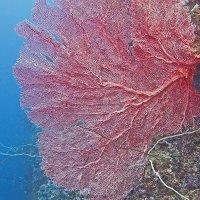 Веточка красного корала :: Валентин Миф