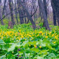 В лесу, на полянке :: Юрий Стародубцев