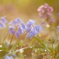 Первоцветье... :: Андрей Ветров