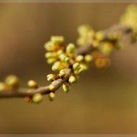 Весна :: Анжелина Пилихосова