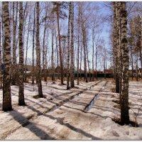 Дороги в лесу . :: Мила Бовкун