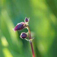 Цветок :: Андрей Майоров