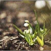 Весна. :: Анжелина Пилихосова